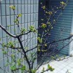 芽吹きの季節